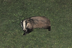 Tim M Badger 7465227996_e7b29e0ea9_h