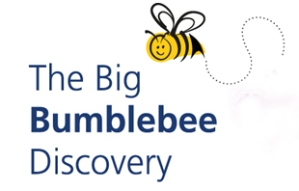 bumblee-discovery